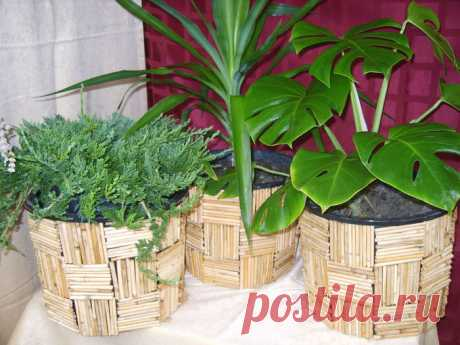FOR WHAT TO STICK MATCHES IN POTS WITH PLANTS!
