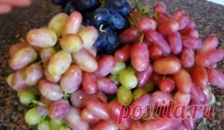 Маринованный виноград без стерилизации - лучший сайт кулинарии
