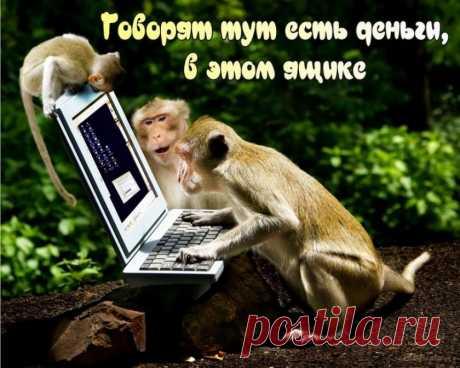 LiderPiara и Youtuber — накрутка подписчиков и лайков в Ютубе и ВК, отзывы