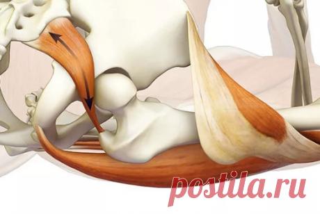 Гимнастика улучшающая кровообращение тазобедренного сустава и органов малого таза. 5 простых упражнений. | health and beauty | Яндекс Дзен