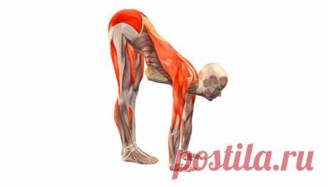 Стречинг: самые лучшие упражнения на растяжку мышц для любого возраста Стречинг – это тренировочная методика, позволяющая сделать мышцы более эластичными, а тело – более гибким.