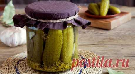 Рецепт соленых огурцов - легкий - кулинарный рецепт