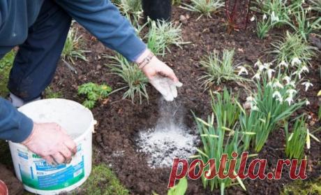 Как лучше применить золу на огороде и в саду