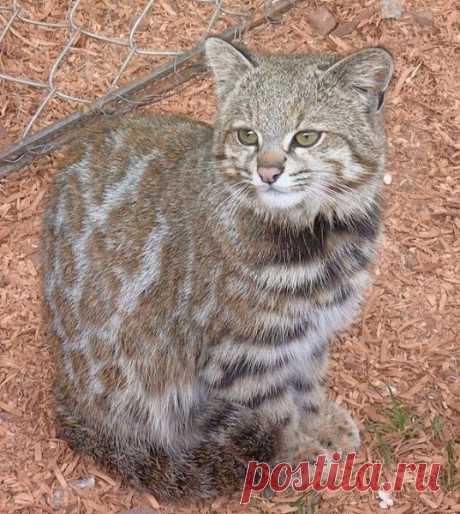 андская кошкаИнтересные новости