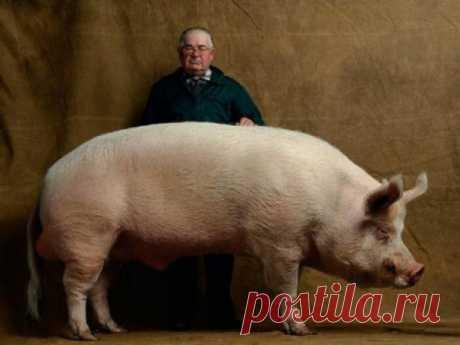 Самая странная рыба в мире • Живая природа