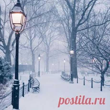 Winter in Washington Square Park, NYC | Photo by @zachasato  #naturegeography
