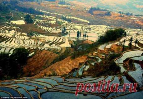 Рисовые террасы провинции Юньнань, Китай.  Солнечный свет отражается в водной глади затопленных рисовых полей на высотных террасах провинции Юньнань, Китай. Длинные, кажущиеся стеклянными водоемы растянулись за линию горизонта в горных районах провинции. Население Юньнаня в большинстве принадлежит к этнической группе Хани, которая выращивает рис на террасах в течение последних 1300 лет. Террасы находятся на высоте от 1000 до 2000 метров над уровнем моря. Рис высаживают один раз в год в ...