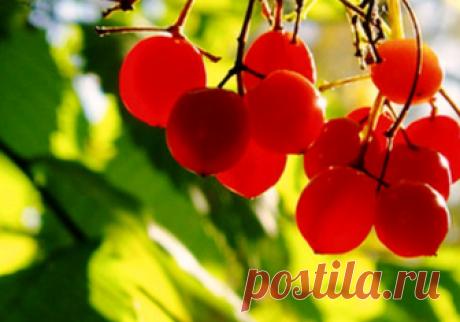Топ – 5 растений для чистки сосудов. Что нужно сушить в саду для настоя и чая. | Огородные дела | Яндекс Дзен