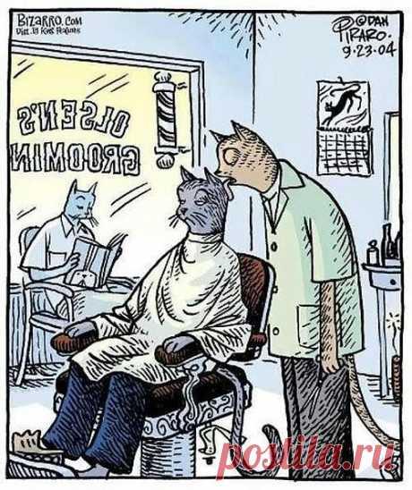 парикмахерская для котов