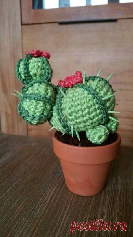 crochet cactus: