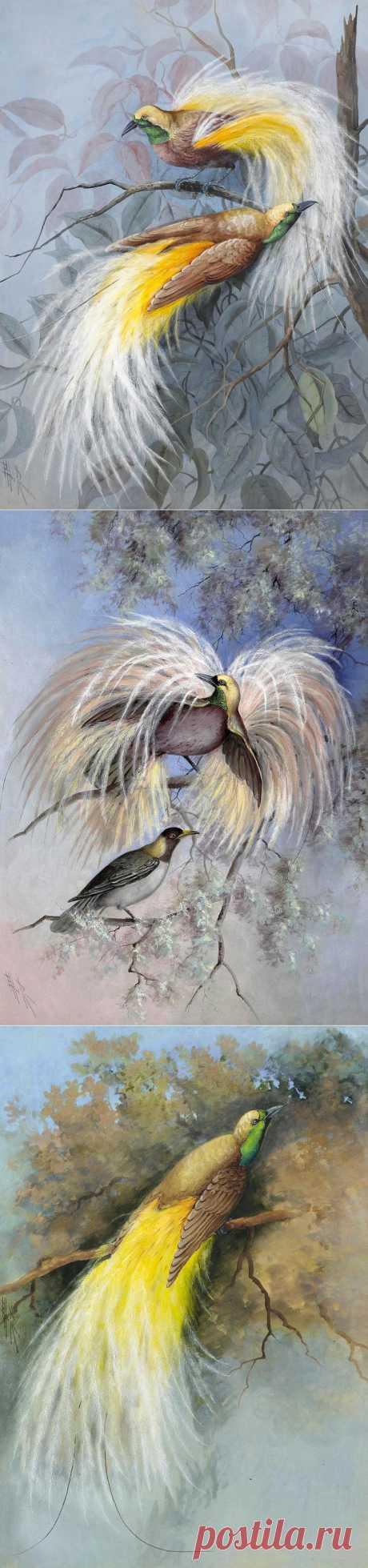 Райские птицы...Marian Ellis Rowan.
