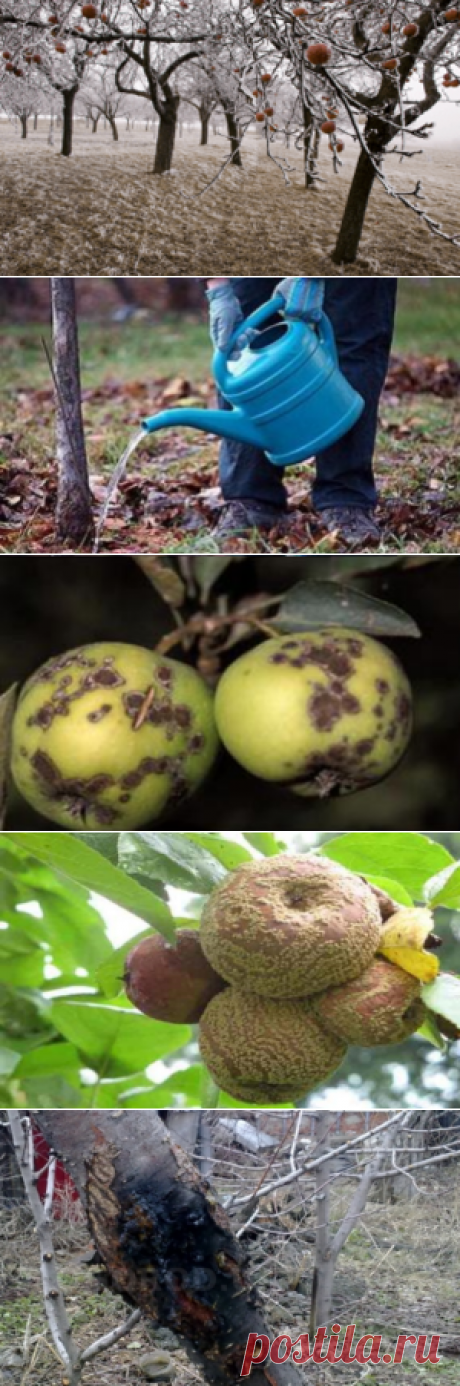 Наиболее распространенные заболевания яблони. - Мой хуторок!