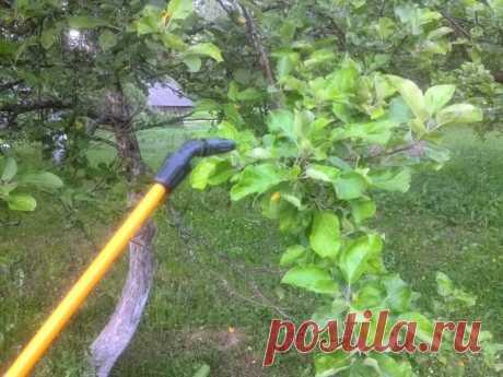 Чем обработать яблоню осенью от парши. Эффективные средства