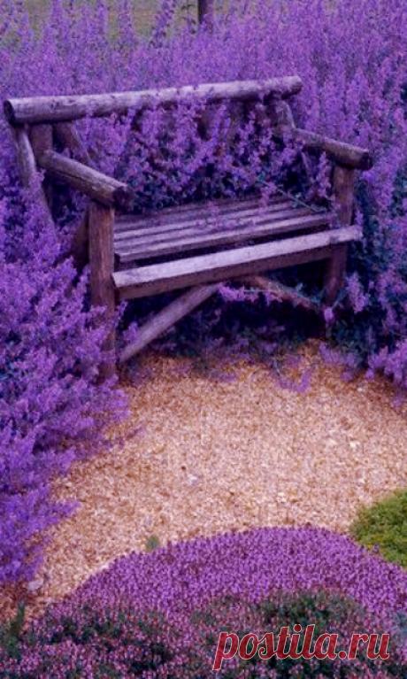 Скамейка в лаванде