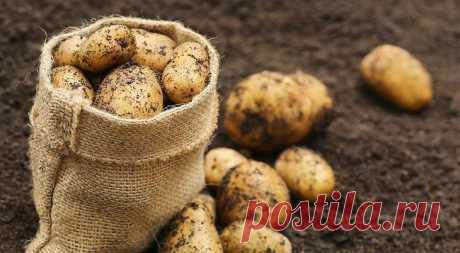 Посадка картофеля по Лунному календарю 2016 года