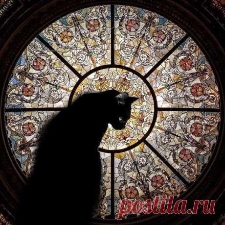 15 фактов о кошках / Питомцы