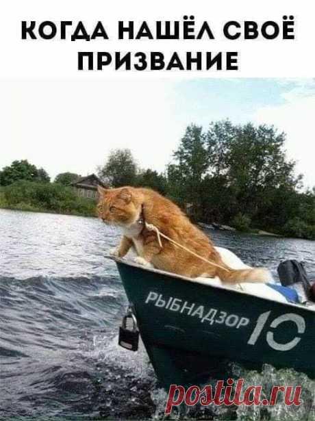 Kotagram.ru - Главная