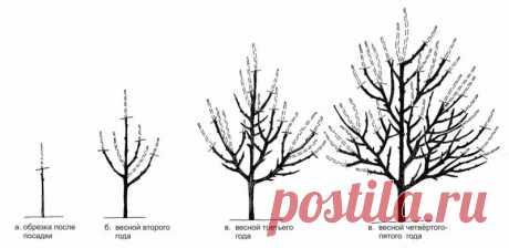 Обрезка и формирование яблонь: фото, видео, описание, как правильно обрезать молодую и старую яблоню