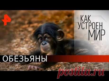 Обезьяны. Как устроен мир с Тимофеем Баженовым (09.06.20).