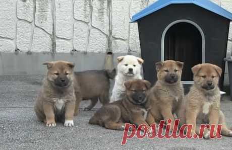 Собака и ее крохотные щенки пришли в дом к незнакомцу...