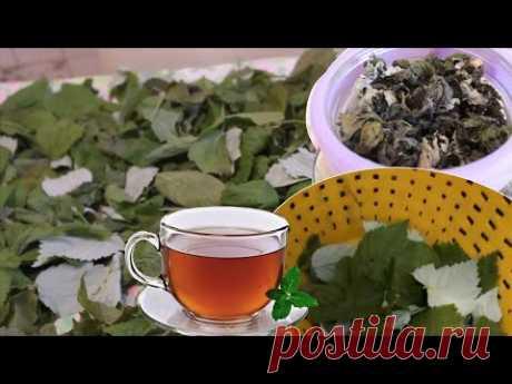 Чай из Листьев Малины, Ежевики, Смородины и др Tea Reciept На Зиму!!!