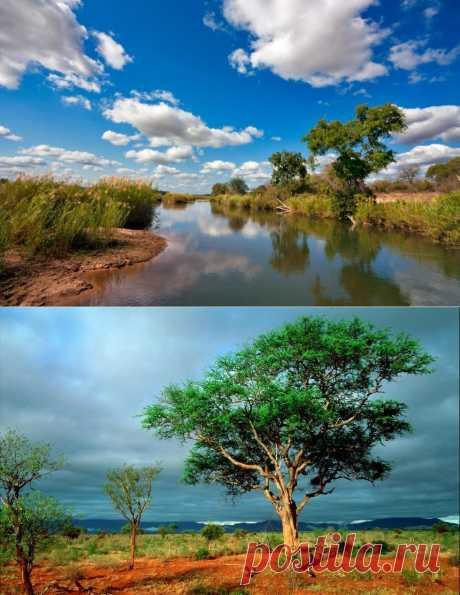 Национальный парк Крюгер в Африке. Провинция Мпумаланга в ЮАР прославилась на весь мир не только благодаря своим живописным холмистым ландшафтам, но и разместившемуся на ее территории национальному заповеднику Крюгер – одному из наиболее посещаемых парков Южной Африки, который давно стал национальной гордостью.