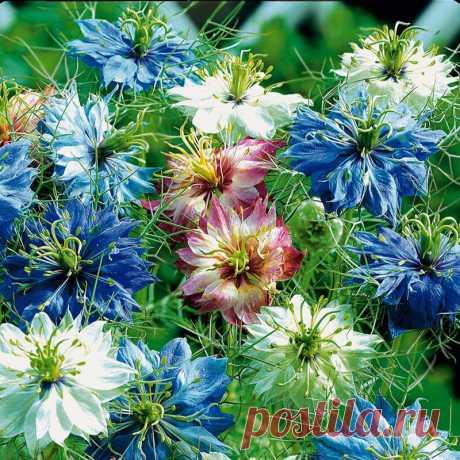 Невероятно красивые цветы от которых невозможно отвести глаз во время цветения | САД | Яндекс Дзен