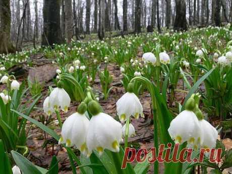 Запах весны!🌺  У каждого Дня свой Аромат. Пусть Сегодня пахнет Счастьем!)) Берите Пример с Весны.. . Расцветайте.. Ни одна Зима не длилась вечно,  Ни одна Весна не пропустила свой Приход.... Какая бы погода ни была у Вас на душе,.. Весеннего, солнечного настроения, добра и радости!