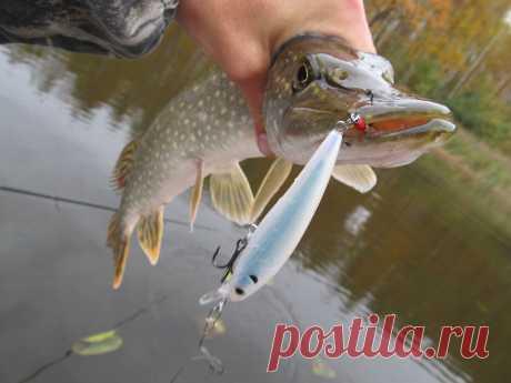 Ловля щуки и окуня в осеннее время, советы как всегда быть с уловом | На рыбалке | Яндекс Дзен