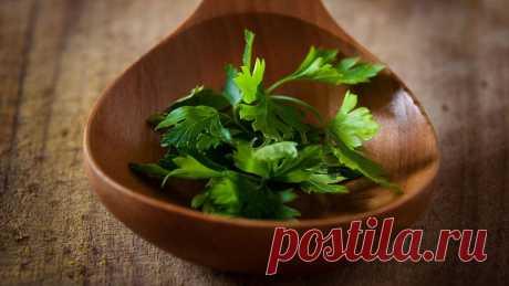 Отвар петрушки вместо чая - польза для здоровья каждый день Петрушки вместо чая - зачем его пить? В чем польза отвара из петрушки, противопоказания напитка.