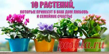 10 растений, которые принесут в ваш дом любовь | Полезные советы