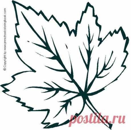 Шаблоны осенних листьев для вырезания из бумаги распечатать - сборка (17 картинок)