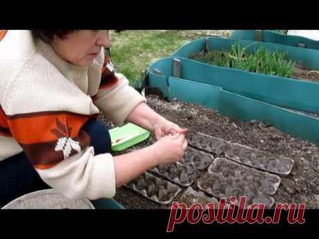 Посев моркови,, редиса, салата в ячейки от яиц. Прореживать не надо!