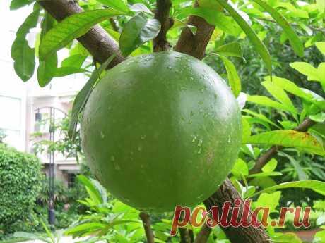 В этом видео ролике из Таиланда 🇹🇭   мы тестируем некоторые экзотические  фрукты: саподилла, ланган, папайя  и зеленые пельмени из супермаркета Tesco Lotus