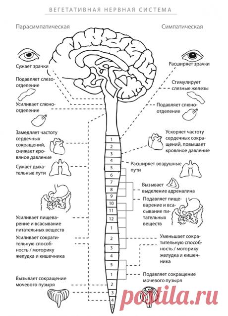 Реакция нервной системы на стресс