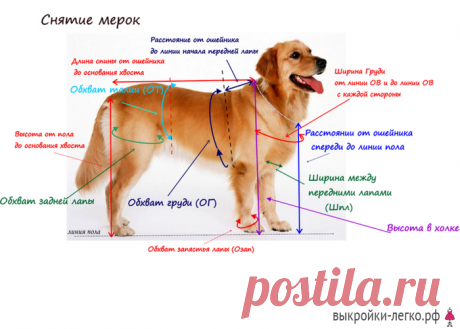 El patrón básico para los perros | los patrones Preparados y las lecciones por la construcción en Выкройки-Легко.рф