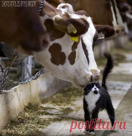 Даёт молоко