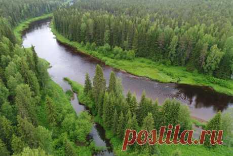Двинско-Пинежский заказник: как исчезают первозданные леса