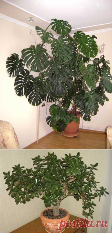 Влияние комнатных растений на людей и энергетику дома   Домохозяйки