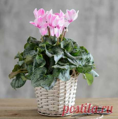 10 комнатных растений, притягивающих любовь и благополучие в семье — Бабушкины секреты