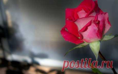 Роза в технике фом-флористики