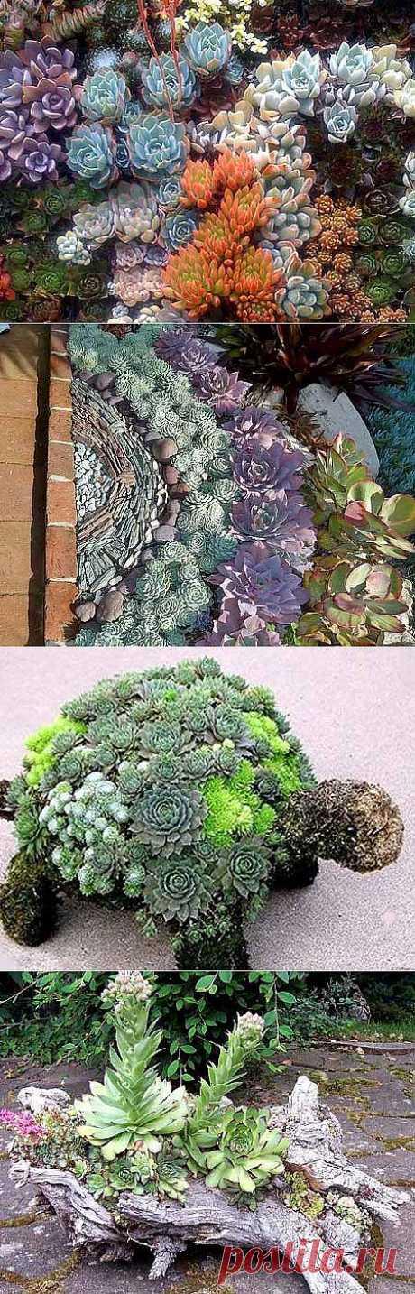 Композиции из цветов суккулентов: живая мозаика в саду