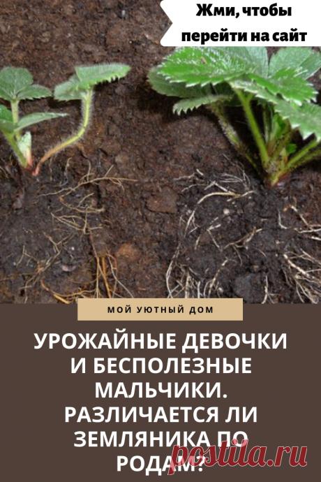 Земляника: как определить урожайность