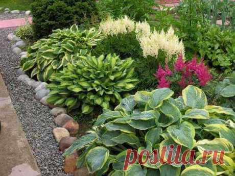 Хосты в дизайне сада: виды и оформление (40 фото) ~ ALL-DEKOR