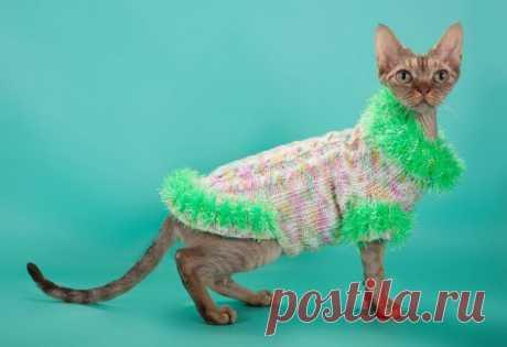 Como vincular la ropa a la gata