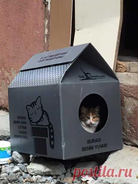 Вот такие домики ставят в Турции бездомным котам. Написано «Это мой домик. Пожалуйста, не причиняйте вред».