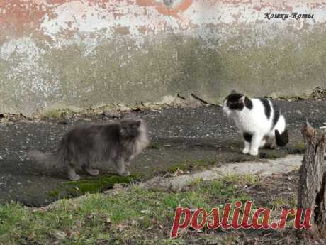 Кошачьи диалоги | Кошки & Коты | Яндекс Дзен  Как вы думаете, о чем они говорят? Конечно, о чем-то своем, сугубо кошачьем. Но при взгляде не некоторых усатых «собеседников», иногда кажется, что их диалоги не очень отличаются от человеческих. А почему бы и нет? Ведь они тоже могут не только враждовать и драться, но и дружить, вместе отдыхать, созерцать окружающий мир, радоваться весеннему теплу. У них могут быть и любовные отношения, и размолвки. Они могут даже по-дружески...