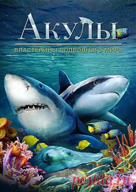"""Фильм """"Акулы: Властелины подводного мира"""" (""""Sharks: Kings of the Ocean"""") - смотреть легально и бесплатно онлайн на MEGOGO.NET"""