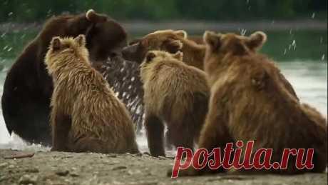 Наши Мишки и природа России - хорошее, доброе видео