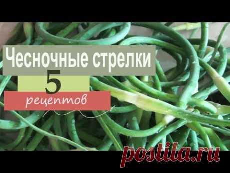 Чесночные стрелки. 5 рецептов приготовления: заготовки на зиму, гарнир, масло, с яйцом
